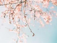 春风十里 不如我在裕彤等你